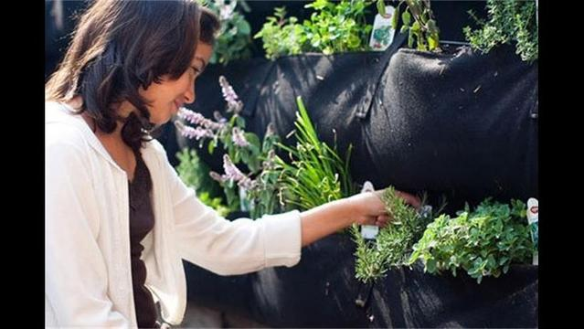 Woolly Pockets: An easy way to grow a 'wooly wall' of plants