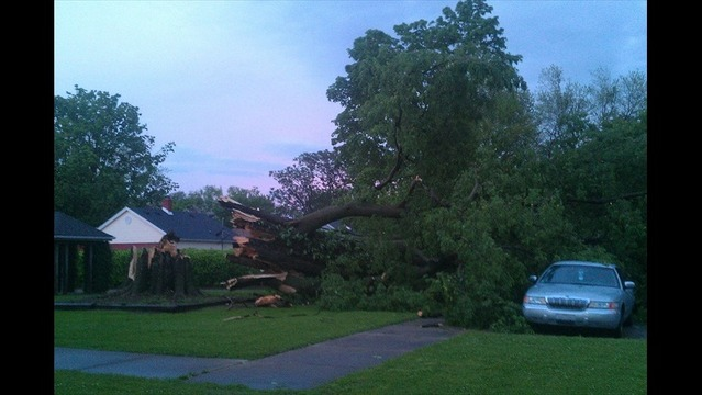Historic Tree Knocked Over Next to Day Care