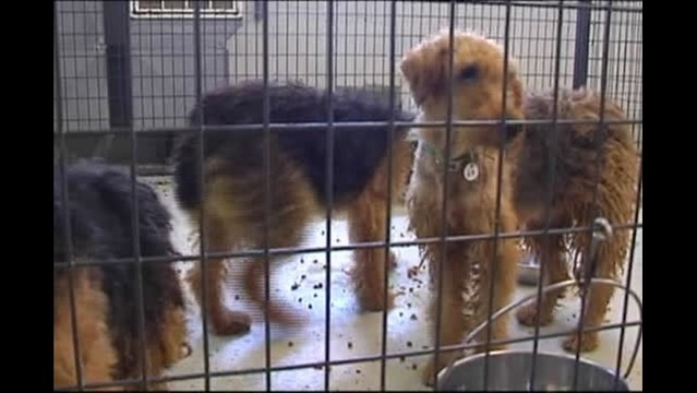 Henderson Couple Sentenced In Airedale Terrier Case