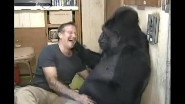 When Robin Williams met Koko — they had a blast