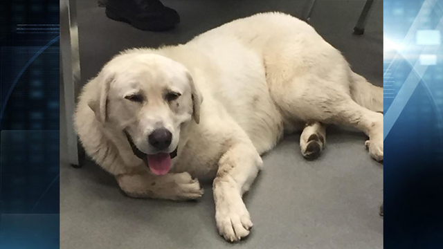 Dog Reunited with Owners Thanks to Microchip Readers