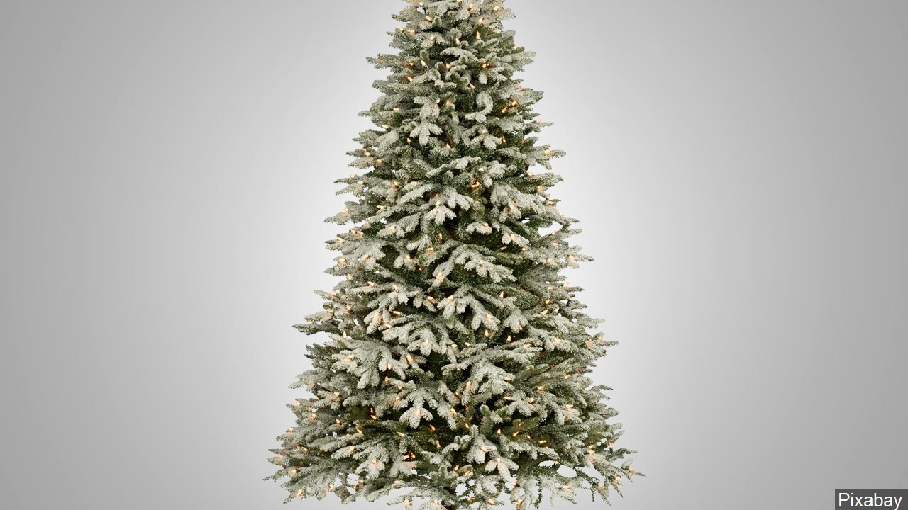 Boy Scouts ready to sell Christmas trees