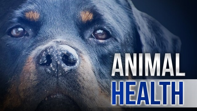 Strain of flu affects dogs