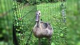 Goose found injured at Garvin Park released back to its family